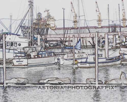 SM-155, astoria, oregon, columbia river, east mooring basin, fishing, boats, seals, sea lions