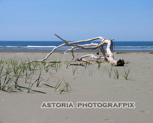SM-393, Astoria Photografpix, aberdeen, washington, beach, shore, pacific ocean, waves, driftwood