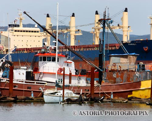 Astoria Photografpix, SM-453, ships, fishing, vessels, tankers, freighters, east mooring, basin, astoria, oregon