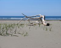 SM-393, Astoria Photografpix, aberdeen, washington, beach, ocean, driftwood